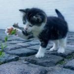 猫が迷子になった!ペット探しの霊視ができる占い師さん・3選